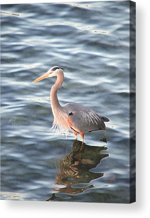 Bird Acrylic Print featuring the photograph Reflections In The Water by Judy Waller