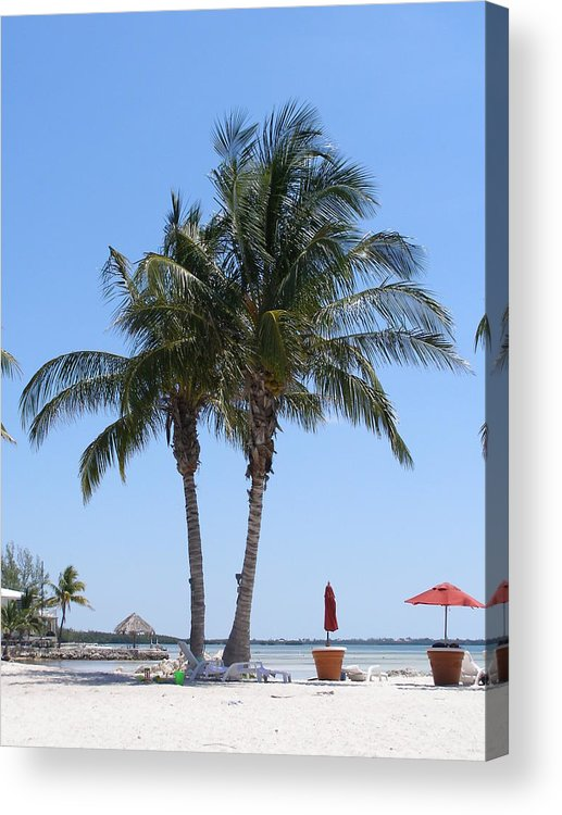 Palms Acrylic Print featuring the photograph Regal Palms by Jim Cooper