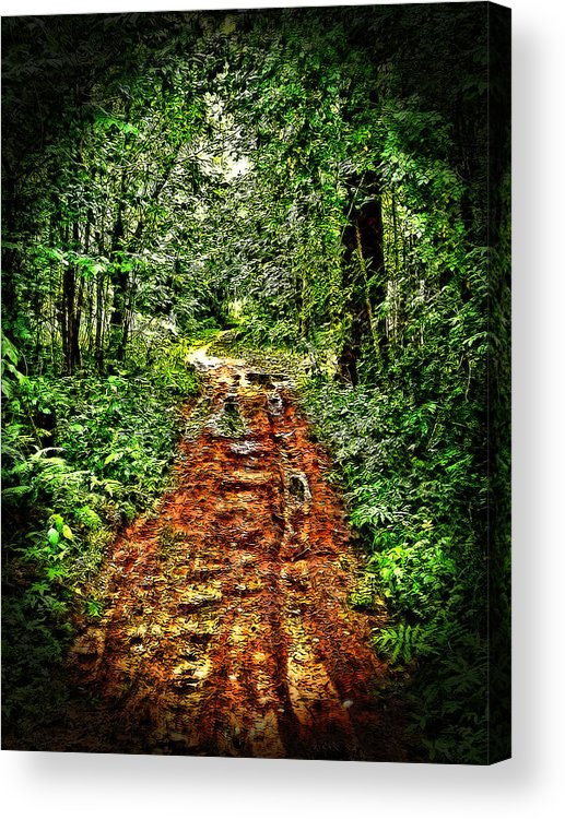 Forest Road Acrylic Print featuring the photograph Road In The Wilderness by Mark Sellers
