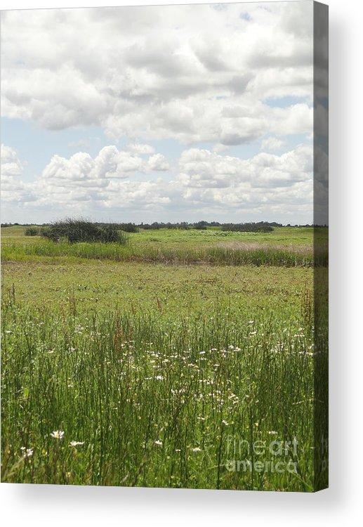 Wetlands Acrylic Print featuring the photograph Sacramento Wetlands by Juan Romagosa