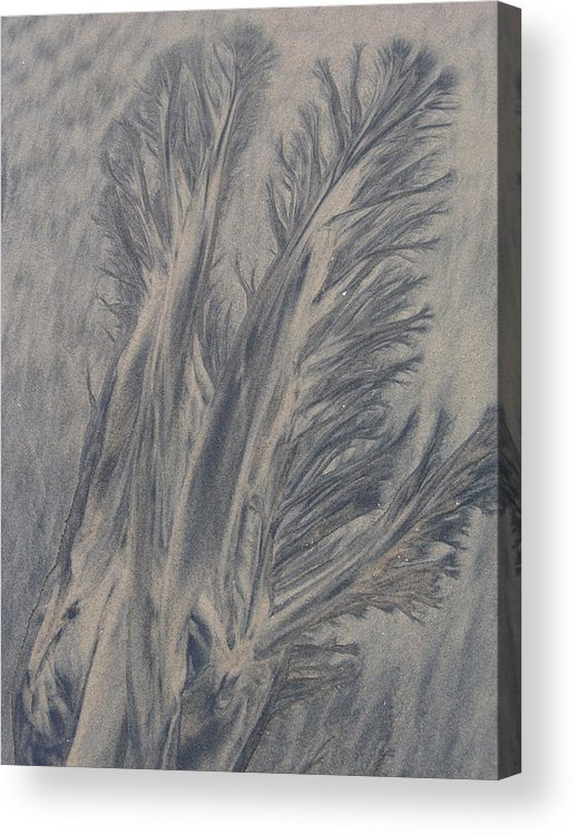 Sand Acrylic Print featuring the photograph Sand Drawing 1 by Kevin Callahan