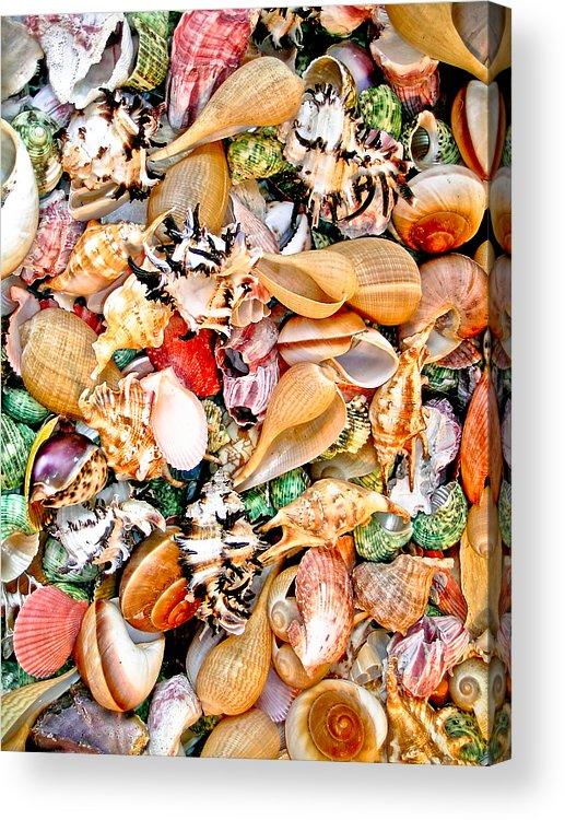 Sea Shell Acrylic Print featuring the photograph Sea Shells by Jim DeLillo