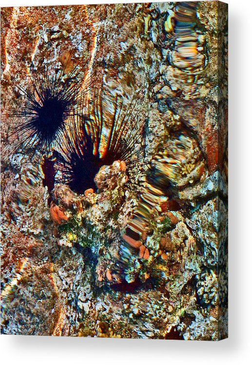 Underwater World Acrylic Print featuring the photograph Sea Urchins. Underwater World. by Andy Za