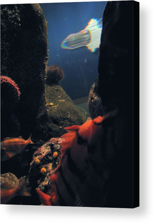 Fish Acrylic Print featuring the photograph Squid And Fish by Jess Thorsen