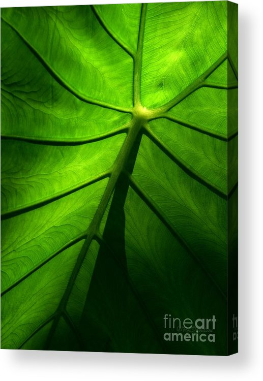 Green Acrylic Print featuring the photograph Sunglow Green Leaf by Patricia L Davidson