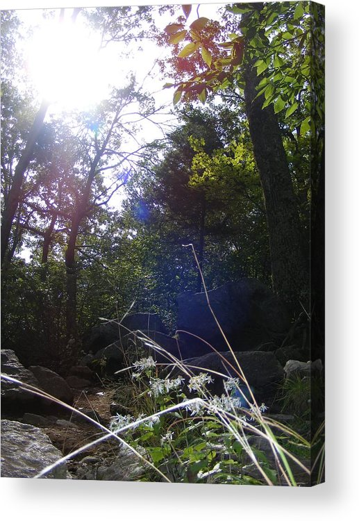 Tree Acrylic Print featuring the photograph Sunlight On Forest Ground by Alison Heckard