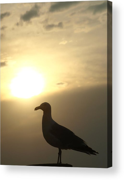 Seagull Acrylic Print featuring the photograph Sunset Gull by Kim