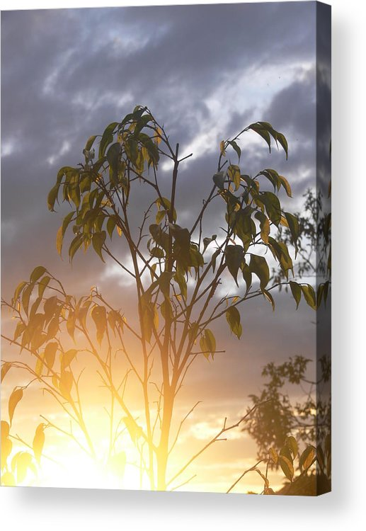 Sunset Acrylic Print featuring the photograph Sunset Leaves 2 by Padamvir Singh