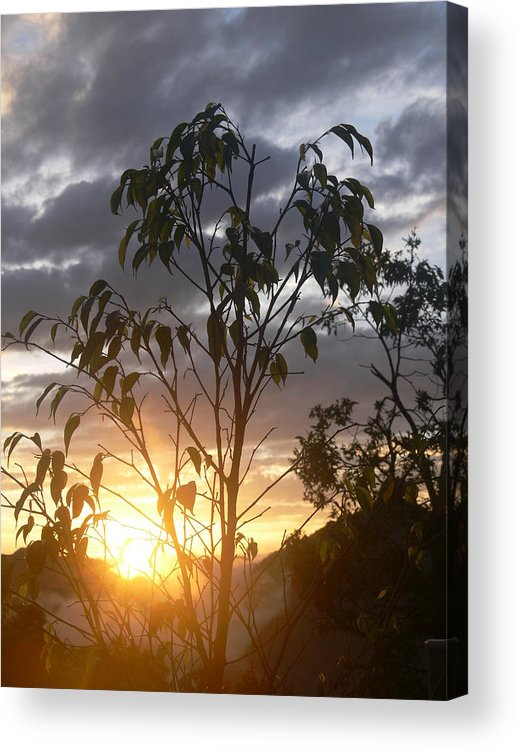 Leaves Acrylic Print featuring the photograph Sunset Leaves 7 by Padamvir Singh