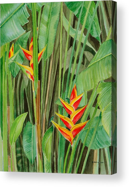 Jamaican Heliconias. Floral With Hummingbirds Sucking Sweet Nectar From The Brilliant Blooms. Acrylic Print featuring the painting Sweet Heliconias by Anji Worton