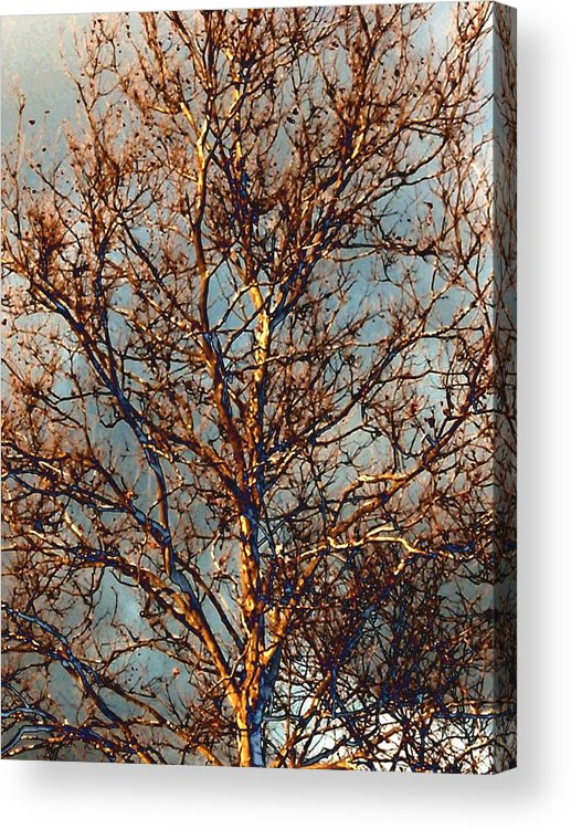Sycamore Acrylic Print featuring the photograph Sycamore Against November Sky by Beth Akerman