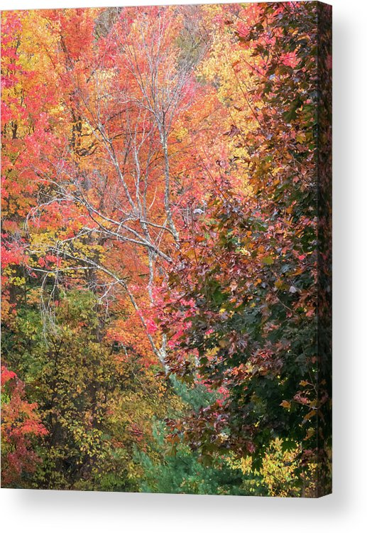 Fall Foliage Acrylic Print featuring the photograph Tall Colors by Diane Moore