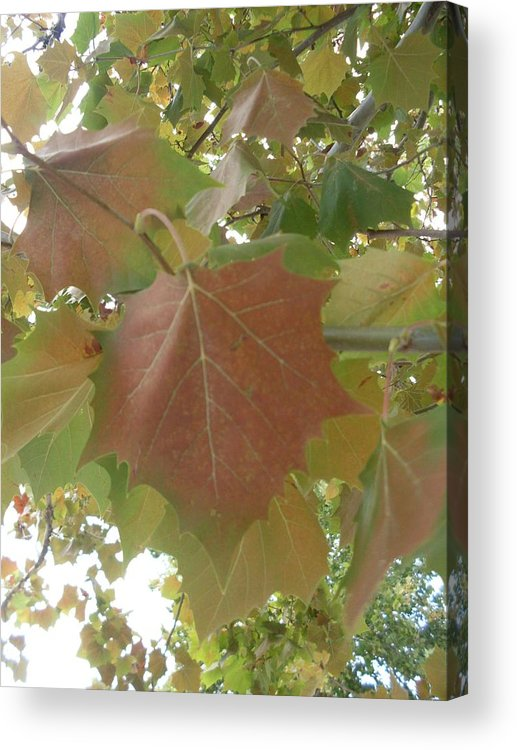 Leaves Acrylic Print featuring the photograph The Beginning Of Fall by Warren Thompson