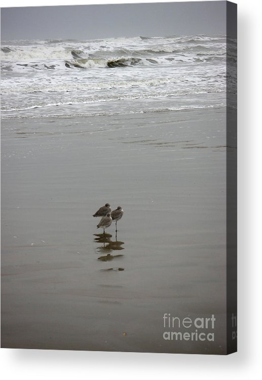 Nature Acrylic Print featuring the photograph The Gulf In Shades Of Gray - Three Sleepy Heads by Lucyna A M Green