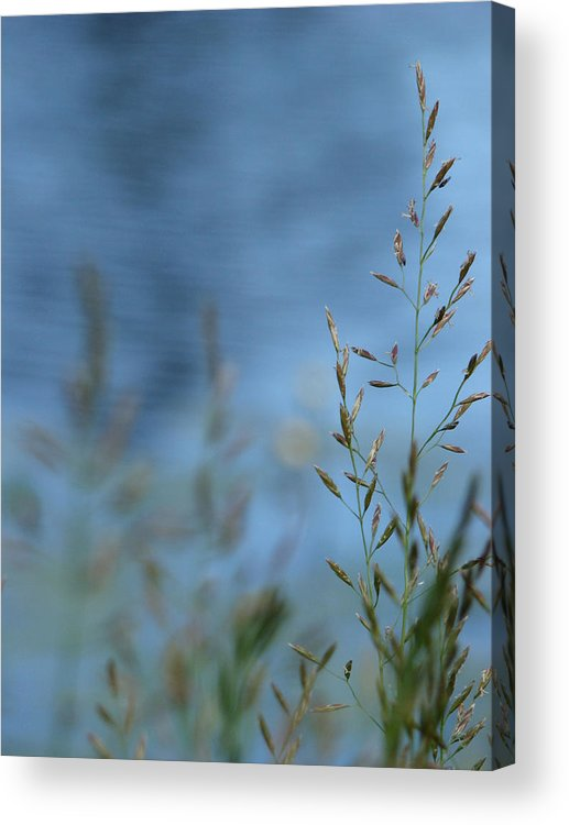 Grass Acrylic Print featuring the photograph The River Behind by Tingy Wende