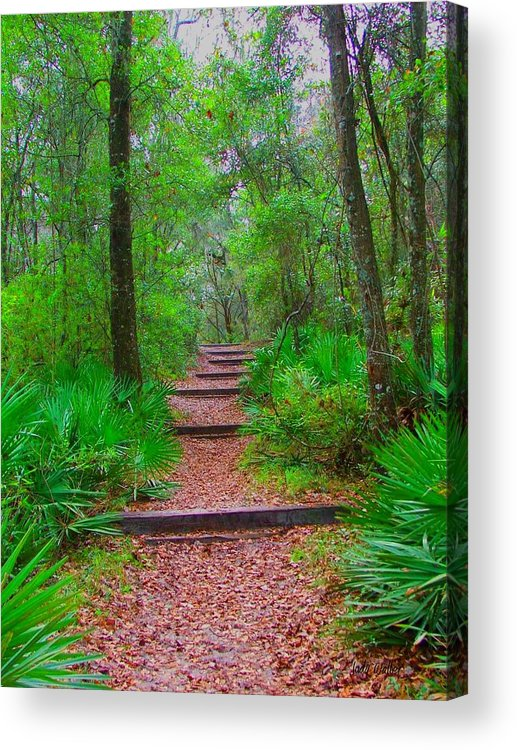 Green Acrylic Print featuring the photograph The Way Up by Judy Waller