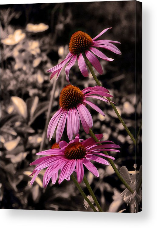 Pink Acrylic Print featuring the photograph Thelma's Grace by Tingy Wende