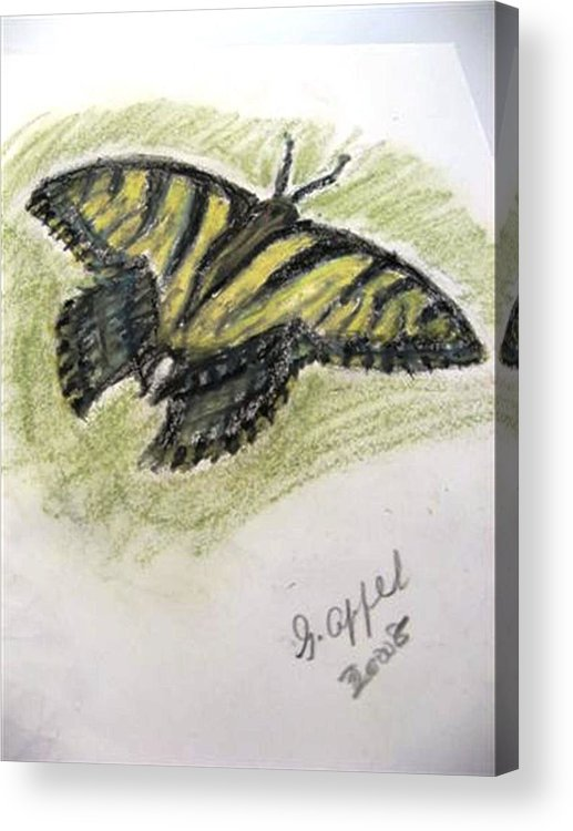 Tiger Butterfly Acrylic Print featuring the drawing Tiger Butterfly by Gloria M Apfel