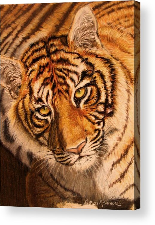Tiger Acrylic Print featuring the drawing Tiger by Karen Ilari