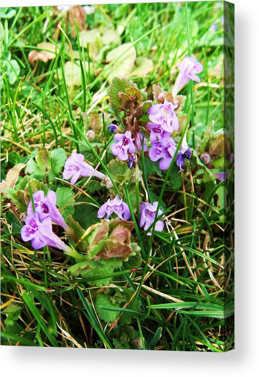Purple Acrylic Print featuring the photograph Tiny Flowers II by Anna Villarreal Garbis