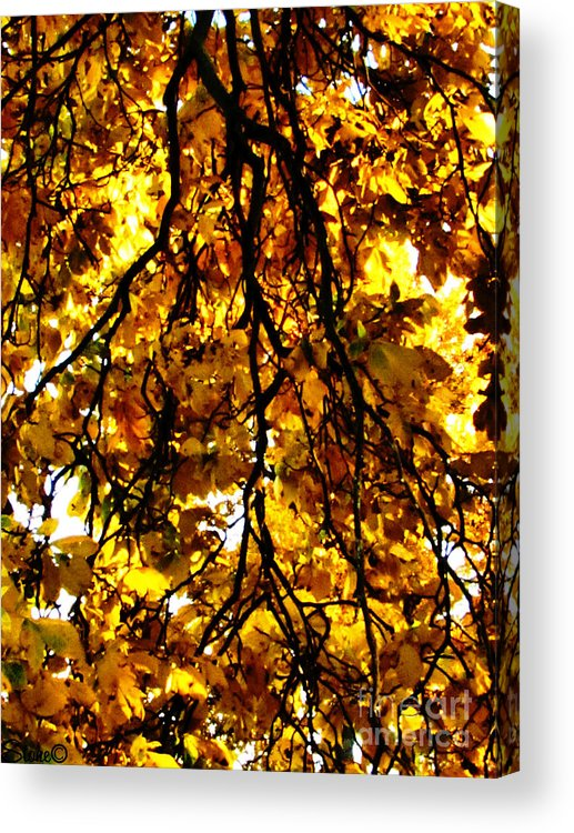 Sun Acrylic Print featuring the photograph Veins Of Life by September Stone