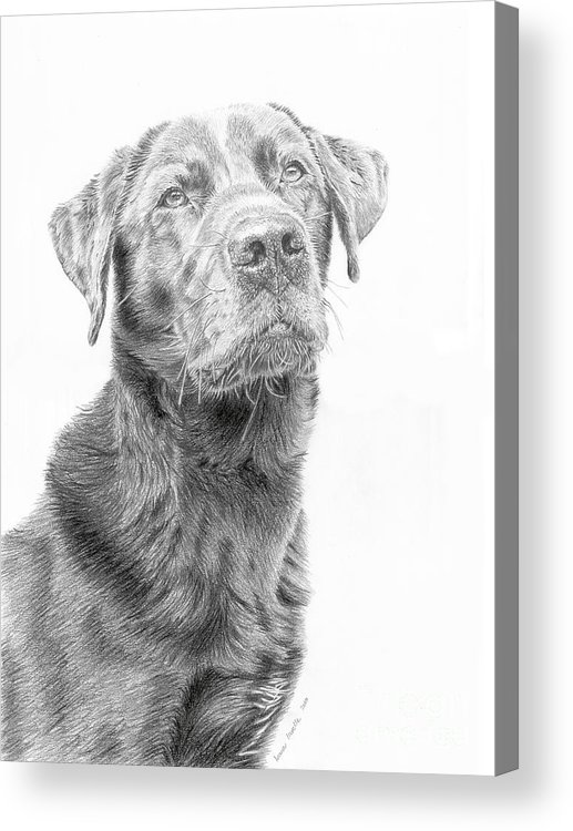 Dog Acrylic Print featuring the drawing Waiting by True Image