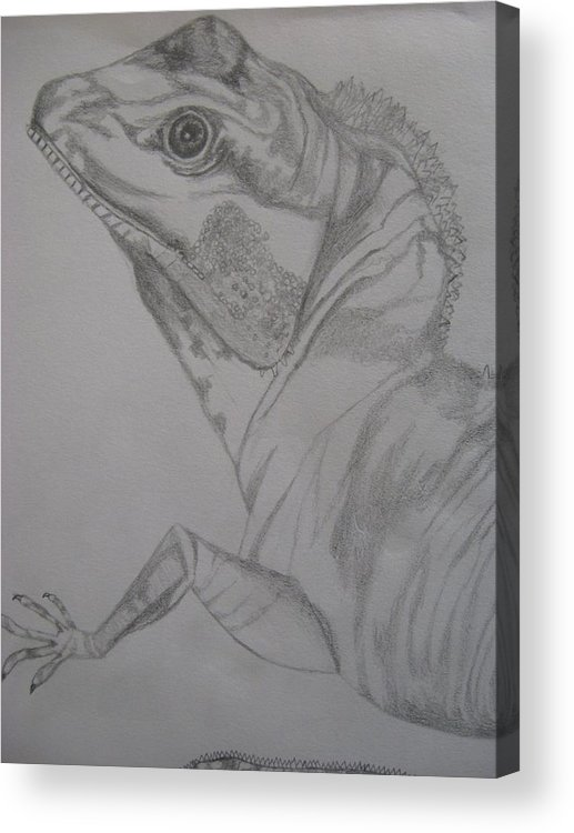 Dragon Acrylic Print featuring the drawing Waterdragon Vertical Close Up by Theodora Dimitrijevic