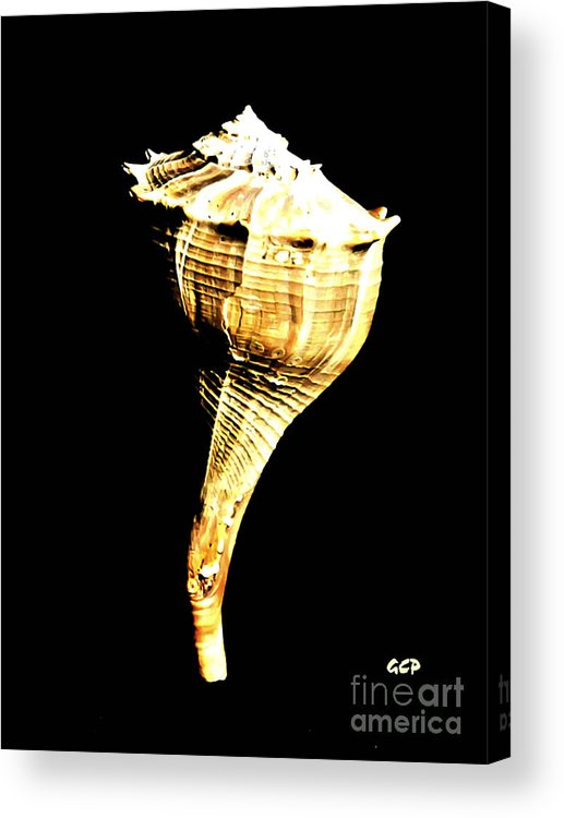 Maritime Acrylic Print featuring the photograph Whelk Sea Shell by Ron West