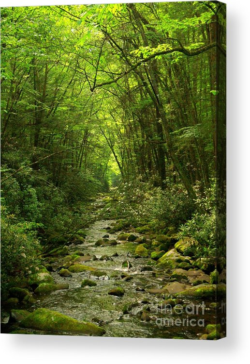 Stream Acrylic Print featuring the photograph Where It Leads by Southern Photo