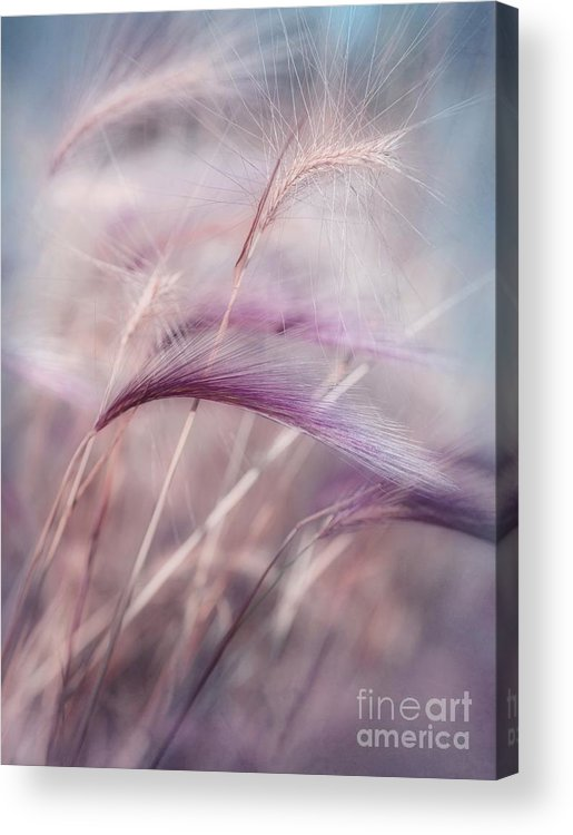Barley Acrylic Print featuring the photograph Whispers In The Wind by Priska Wettstein