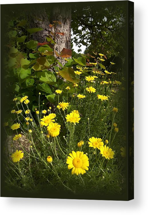 Flower Acrylic Print featuring the photograph Wild Flowers by Jim Darnall