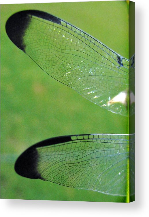 Dragonfly Acrylic Print featuring the photograph Wings by Nikki Mansur