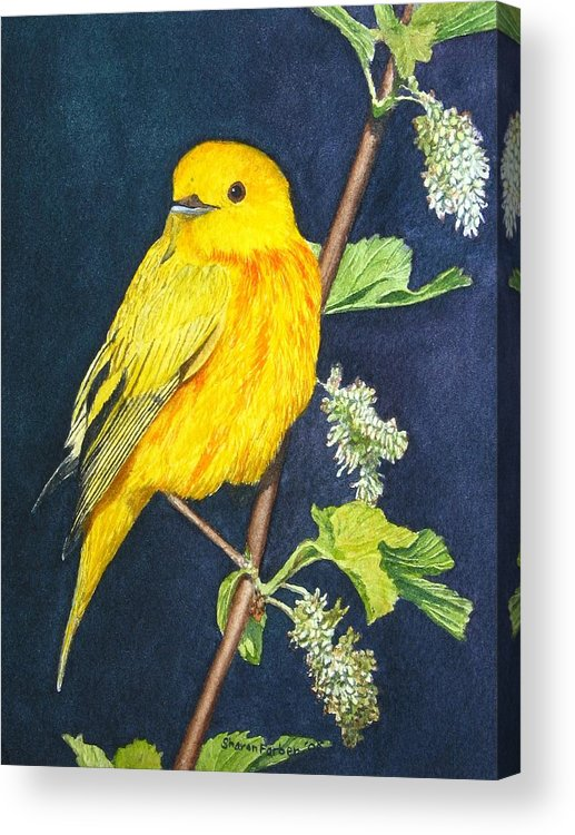 Bird Acrylic Print featuring the painting Yelllow Warbler by Sharon Farber