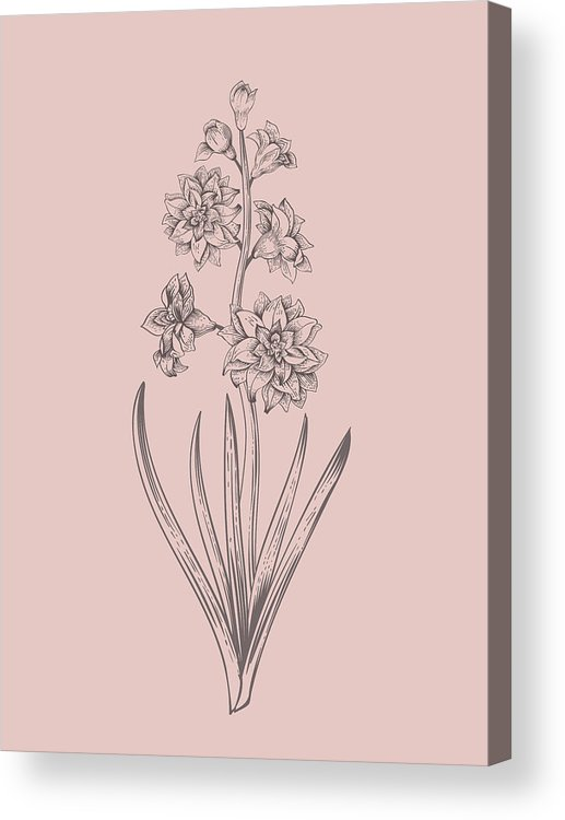 Hyacinth Acrylic Print featuring the mixed media Hyacinth Blush Pink Flower by Naxart Studio