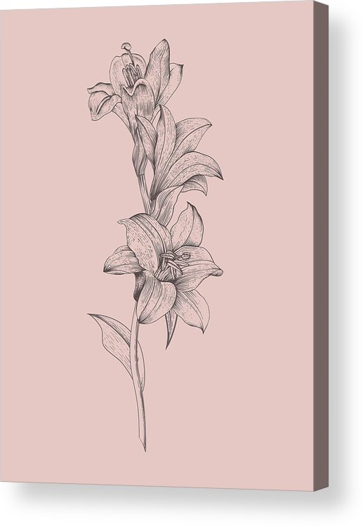Lily Acrylic Print featuring the mixed media Lily Blush Pink Flower by Naxart Studio