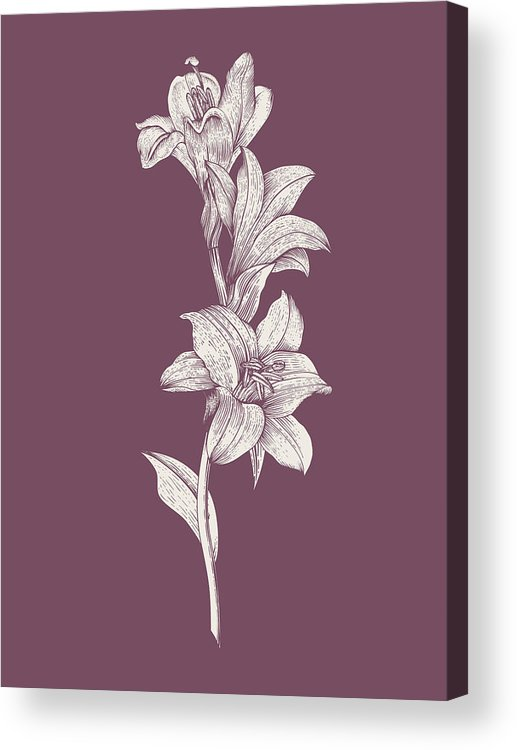 Lily Acrylic Print featuring the mixed media Lily Purple Flower by Naxart Studio