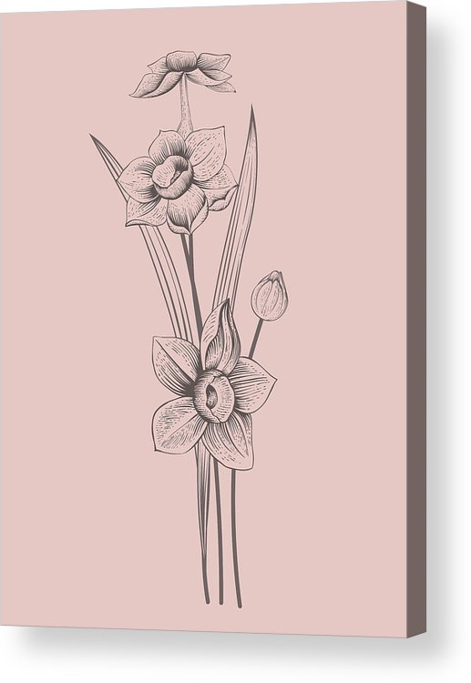 Narcissus Acrylic Print featuring the mixed media Narcissus Blush Pink Flower by Naxart Studio