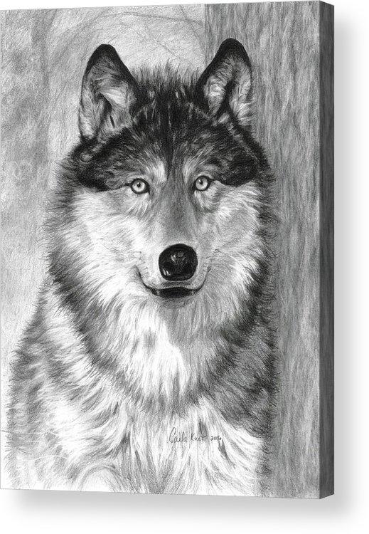 Wolf Acrylic Print featuring the drawing Alpha by Carla Kurt