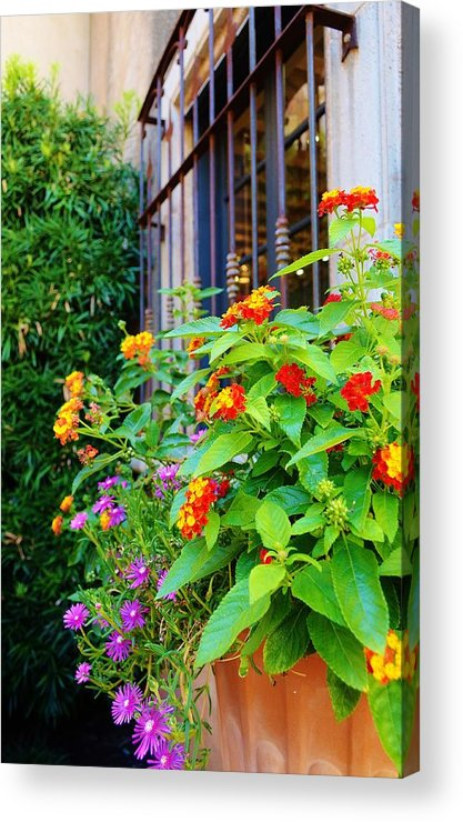 Landscape Acrylic Print featuring the photograph Flowers No 8 by Thomas Gregg Hoctor