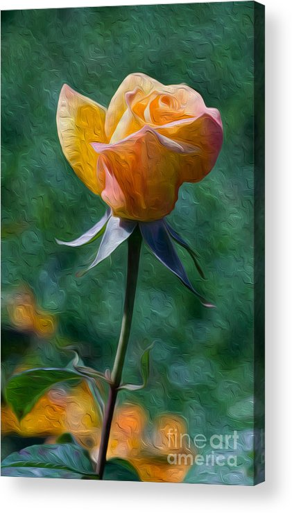 Flower Acrylic Print featuring the digital art Rose Prominence II by Kenneth Montgomery
