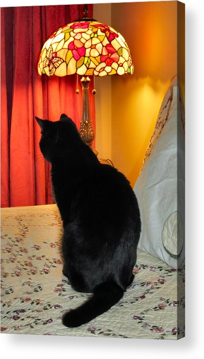 Cat Acrylic Print featuring the photograph Witches Cat by Art Dingo