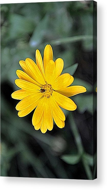 Flower Acrylic Print featuring the photograph Flower by Luiza W