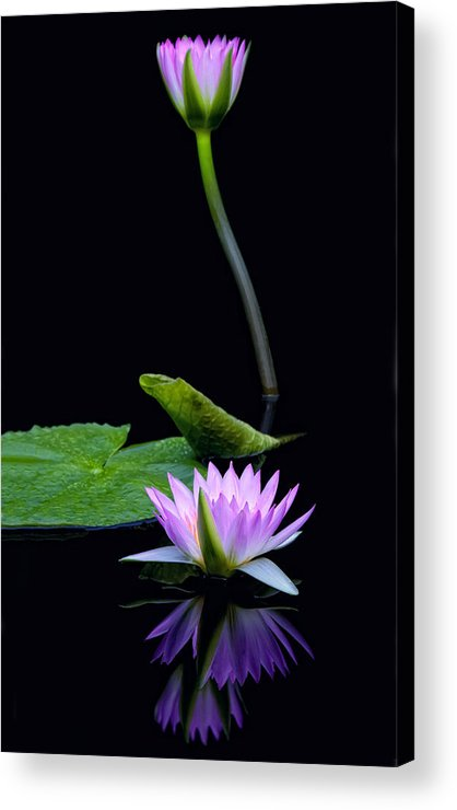Water Acrylic Print featuring the photograph Water Lilies And Reflections by Margaret Barry