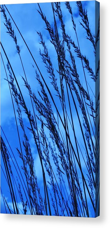 Blue Grass Acrylic Print featuring the photograph Blue Grass by Rebecca Coors