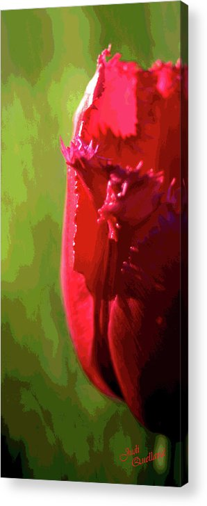 Tulip Acrylic Print featuring the photograph Artistic Red Tulip by Judi Quelland