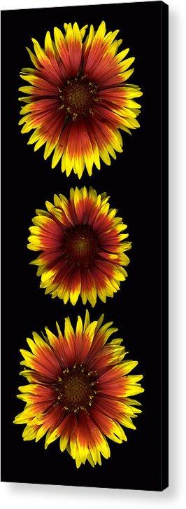 Scanography Acrylic Print featuring the photograph Fanfare Trio by Deborah J Humphries
