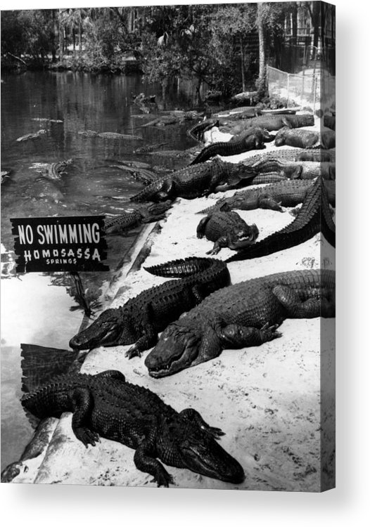 Retro Images Archive Acrylic Print featuring the photograph No Swimming by Retro Images Archive