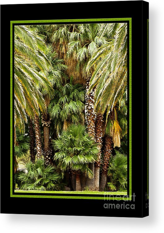 Park Acrylic Print featuring the photograph Park Palms by Larry White