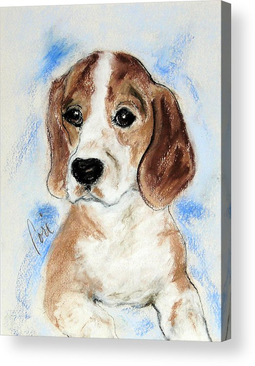 Dog Acrylic Print featuring the drawing Sweet Innocence by Cori Solomon