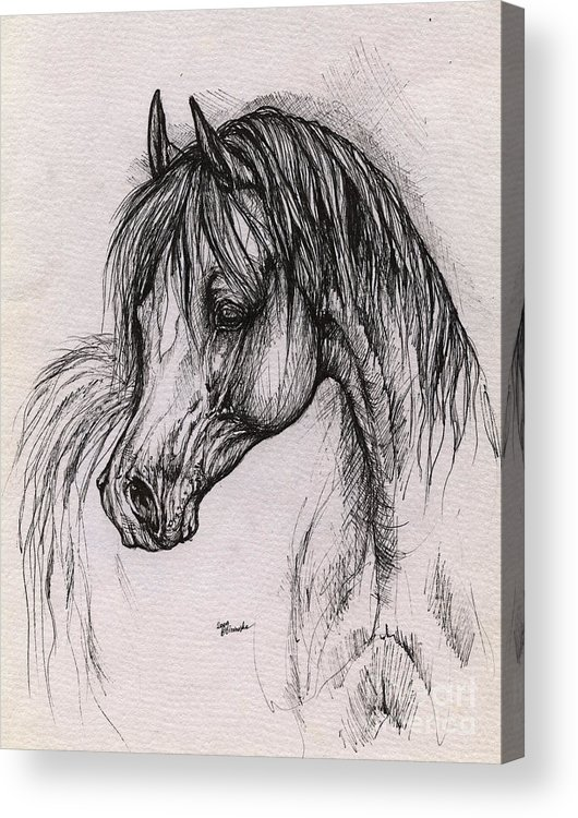 Arabian Horse Acrylic Print featuring the drawing The Arabian Horse With Thick Mane by Angel Ciesniarska